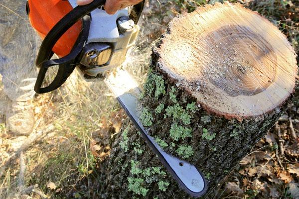 Comment couper un arbre dans son jardin