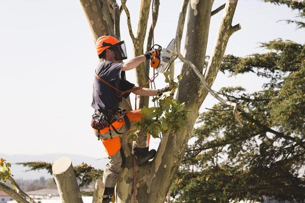 Couper arbre