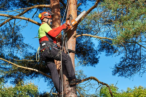 Élagage abattage d'arbres avant de construire une maison