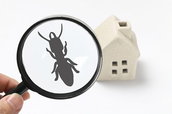 termites maison