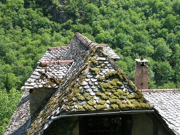toiture-maison-ancienne-mousse